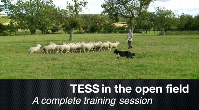 New Herding Dog Training Video