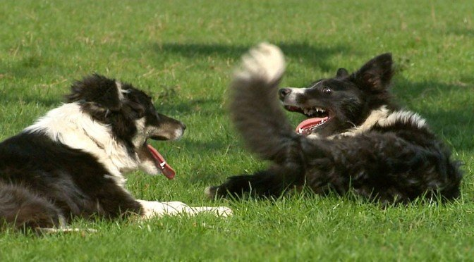 Now Available – A Tale of Two Collies!
